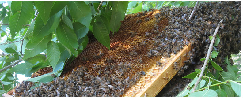 Воронежский мёд